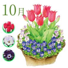 【毎月届くお花の頒布会】球根と花苗の春らんまんコース(2019年10月~2020年3月)