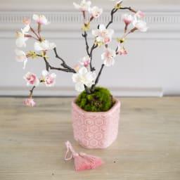 桜の盆栽 小紋筒鉢 タッセルは外せます(ア、イどちらも)