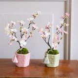 桜の盆栽 小紋筒鉢 写真