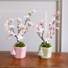 桜の盆栽 小紋筒鉢