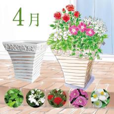 【毎月届くお花の頒布会】らくらく華やかガーデンコース(2020年4月~2020年9月)
