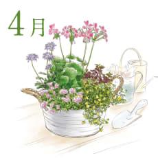 【毎月届くお花の頒布会】プランツコーディネートコース(鉢あり)(2020年4月~2020年9月)
