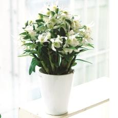 【毎月届くお花の頒布会】華やかオーキッドルームコース(2020年4月~2020年9月)