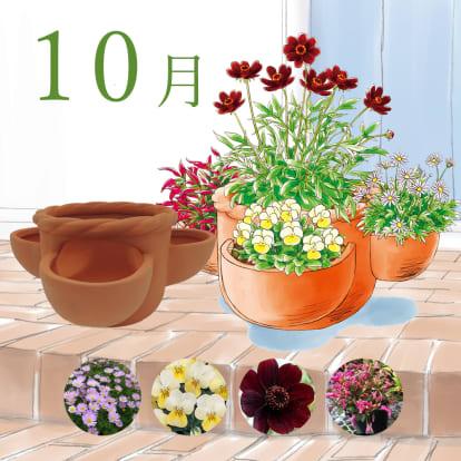 【毎月届くお花の頒布会】らくらく華やか…
