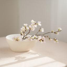 山形からの春便り啓翁桜8本(ミドル) 小さな枝先は、アレンジや箸置きに。