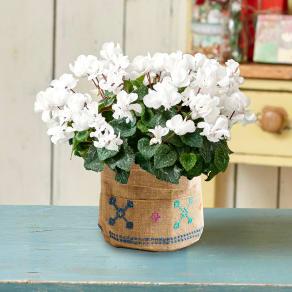 PeopleTreeジュート手刺しゅう鉢カバー 自然開花八重咲ミニシクラメン「ウインクホワイト」 写真