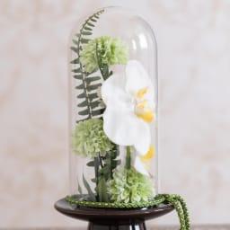 ガラスドームの供花 胡蝶蘭 横からみてもしっかり花が!