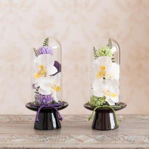 ガラスドームの供花 胡蝶蘭 写真