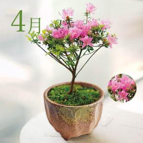 【毎月届くお花の頒布会】てのひら盆栽コース(2021年4月~2021年9月) 写真