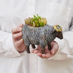 シーププランター(多肉植物寄せ植え)