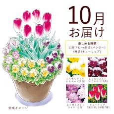 【毎月届くお花の頒布会】球根と花苗の春らんまんコース(2021年10月~2022年3月)