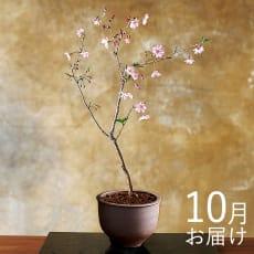 【毎月届くお花の頒布会】てのひら盆栽コース(2021年10月~2022年3月)