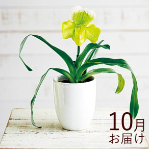 【毎月届くお花の頒布会】華やかオーキッドルームコース(2021年10月~2022年3月) 写真