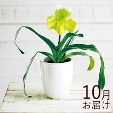 【毎月届くお花の頒布会】華やかオーキッドルームコース(2021年10月~2022年3月)