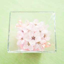 桜 アレンジ ガラスケース入り ドライフラワー 春 ピンク インテリア サクラ ギフト プレゼント 誕生日 日本製 上から見てもお楽しみいただけます。