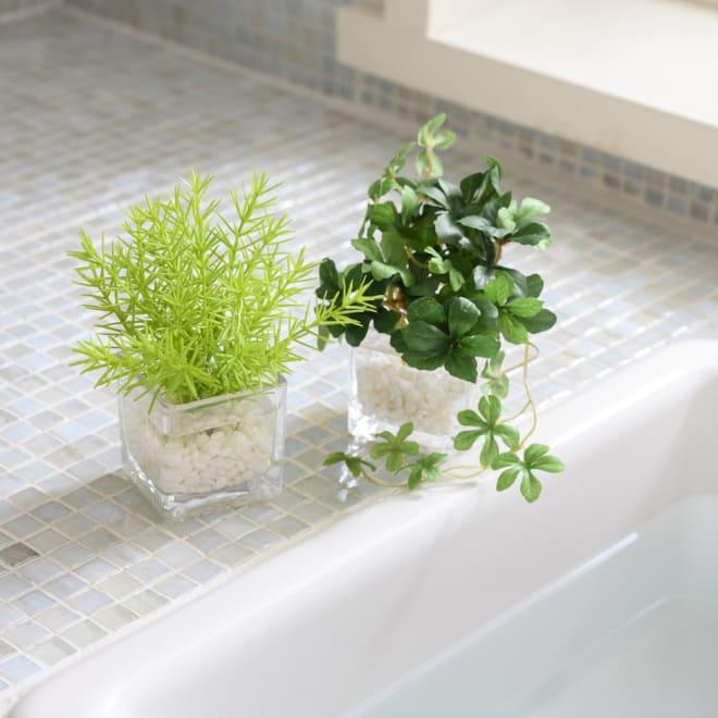 ウォーターキューブ グリーン2種セット 涼やかなお部屋を演出する使い勝手の良いミニグリーンです 左:ミリオン、右:シュガーバイン