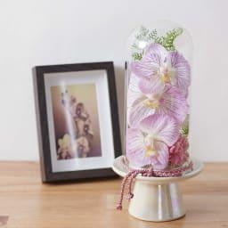 ガラスドームの供花胡蝶蘭         (イ)ピンク