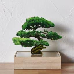 Toumei/トウメイ 盆栽 (ア)マツ(緑)