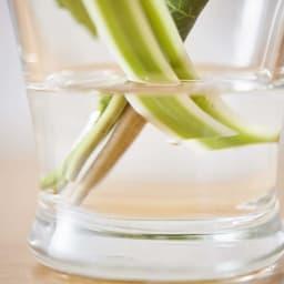 ペットご供養セット (ロウソク・線香&胡蝶蘭マジックウォーターミニ供花) まるで本物の水が入っているような「マジックウォーター」が涼しげな印象とリアルさを引き立てます。