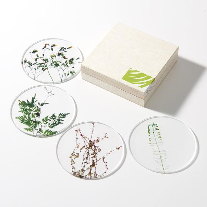 TOUMEI コースターセット 押し花 (高級感のある桐箱入りで、ギフトにもおすすめです。写真は、ア)A ※パッケージのシールデザインは変更になる場合がございます