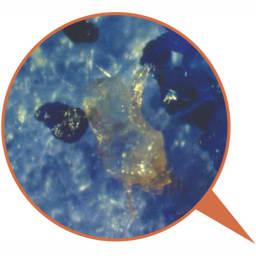 日革研究所製「ダニ捕りロボ」 ラージサイズ 5枚組(ソフトケース大5枚付き) ダニ捕りロボに捕獲され、ひからびたダニの死骸