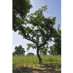 L'OCCITANE/ロクシタン シアバター 150ml シアの木