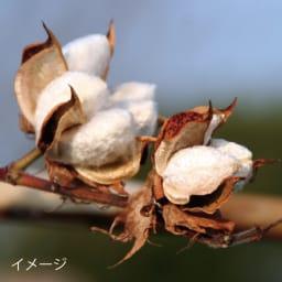 The LAST TOWEL/ザ ラスト タオル 期間限定セット タオルの要であるパイルの素材には、有機栽培で育てられたオーガニックコットンを使用しています。いきいきとしたパイルにするため綿花を傷つけない手摘みの素材にこだわりました。