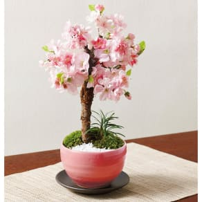 旭山桜の花 写真