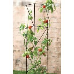 トマト&野菜トレリス3本組 使用例