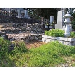特許取得 植物性除草剤(2本) お墓周りなどの雑草対策に便利。
