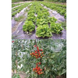【お試し】ニーム肥料(1袋) ※収穫物イメージ