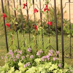 ヨーロピアンフェンス 高さ219cm 2枚組 つる性の植物を這わせてトレリスとしての使い方もおすすめです。