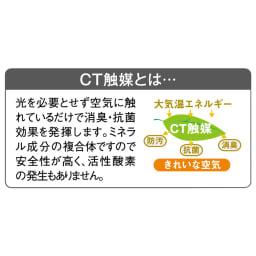 CT触媒インテリアグリーン クワズイモ