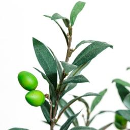 CT触媒加工 インテリアグリーン オリーブの木