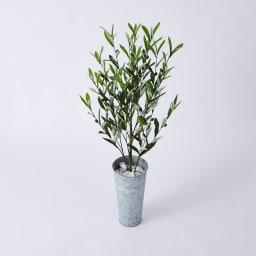 CT触媒 オリーブツリー