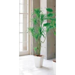 CT触媒インテリアグリーン ドラセナ 約径70高さ160cm 高さ約160cm