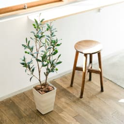 CT触媒加工 インテリアグリーン オリーブの木 インテリアバークを鉢にセットしてすぐに飾れます