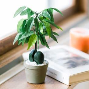 CT触媒 ミニインテリアグリーン 豆の木       写真