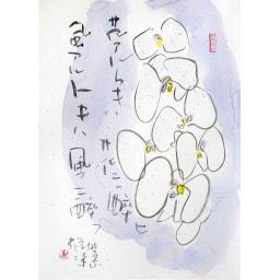 胡蝶蘭(コチョウラン)