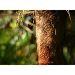高田耕造商店/紀州野上谷産 ズックにやさしいたわし木柄 棕櫚の樹