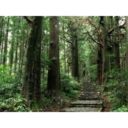 橋本達之助工芸/国産 紀州檜天然木 3WAYティッシュケースボックス 熊野古道にひろがる紀州檜