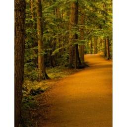 Woodlore(ウッドロア)/ ベーシックシダーハンガー 5本組