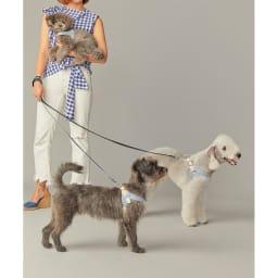 イタリア本革 犬用ハーネス Mサイズ
