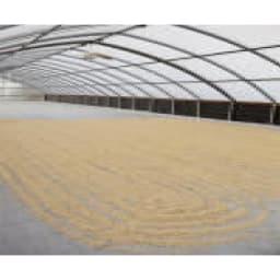 MAME'S/マメーズ ハワイ コナ ハワイアンクイーン農園 (250g) 大きなビニールハウスのようなパティオ(乾燥場)で1~2か月程じっくり自然乾燥させます。