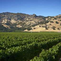 【赤ワイン】クロ・デュ・ヴァル スノーマン・ノース・コースト・ジンファンデル クロ・デュ・ヴァルのぶどう畑。