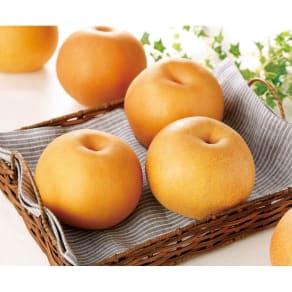 栃木産 3種梨の食べ比べ (各2玉 計6玉) 写真