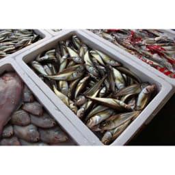 新・ディノスプレミアムドッグフード900g|無添加・国産ドッグフード|京都「菱六」米麹パウダー配合 ※上記画像はイメージになります。