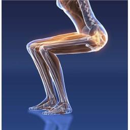 ミズノ スクワットスリール スクワットは太もも前側の筋肉(大腿四頭筋)と、お尻の筋肉(大臀筋)を鍛えることが可能。