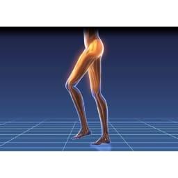 ミズノ スクワットスリール 特に太もも前側の筋肉(大腿四頭筋)は歩行や立ち座りなどの日常動作に非常に重要。鍛えるためにはスクワットが有効的です。